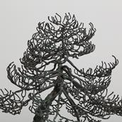 A Superb Bronze Bonsai Tree Table Sculpture 1960s Alternate image